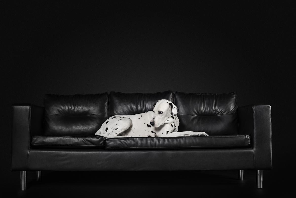 photographe-chiens-chats-animaux-portraits-studio-saint-malo-bretagne-187