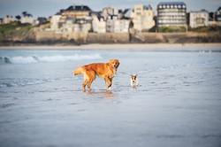 photographe-chiens-chats-animaux-portraits-exterieur-saint-malo-bretagne-212