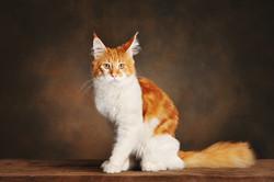 photographe-chiens-chats-animaux-portraits-studio-saint-malo-bretagne-188