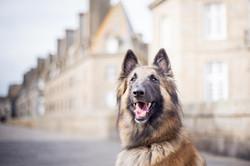photographe-chiens-chats-animaux-portraits-exterieur-saint-malo-bretagne-206