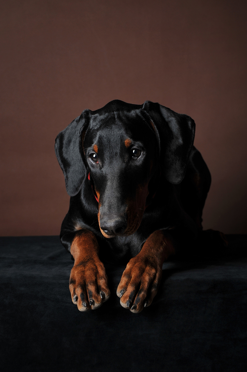 photographe-chiens-chats-animaux-portraits-studio-saint-malo-bretagne-183