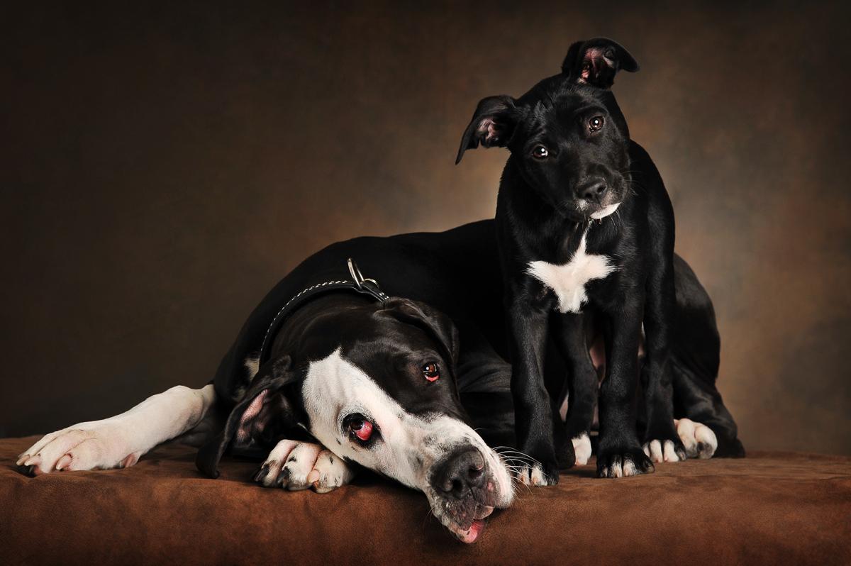 photographe-chiens-chats-animaux-portraits-studio-saint-malo-bretagne-191