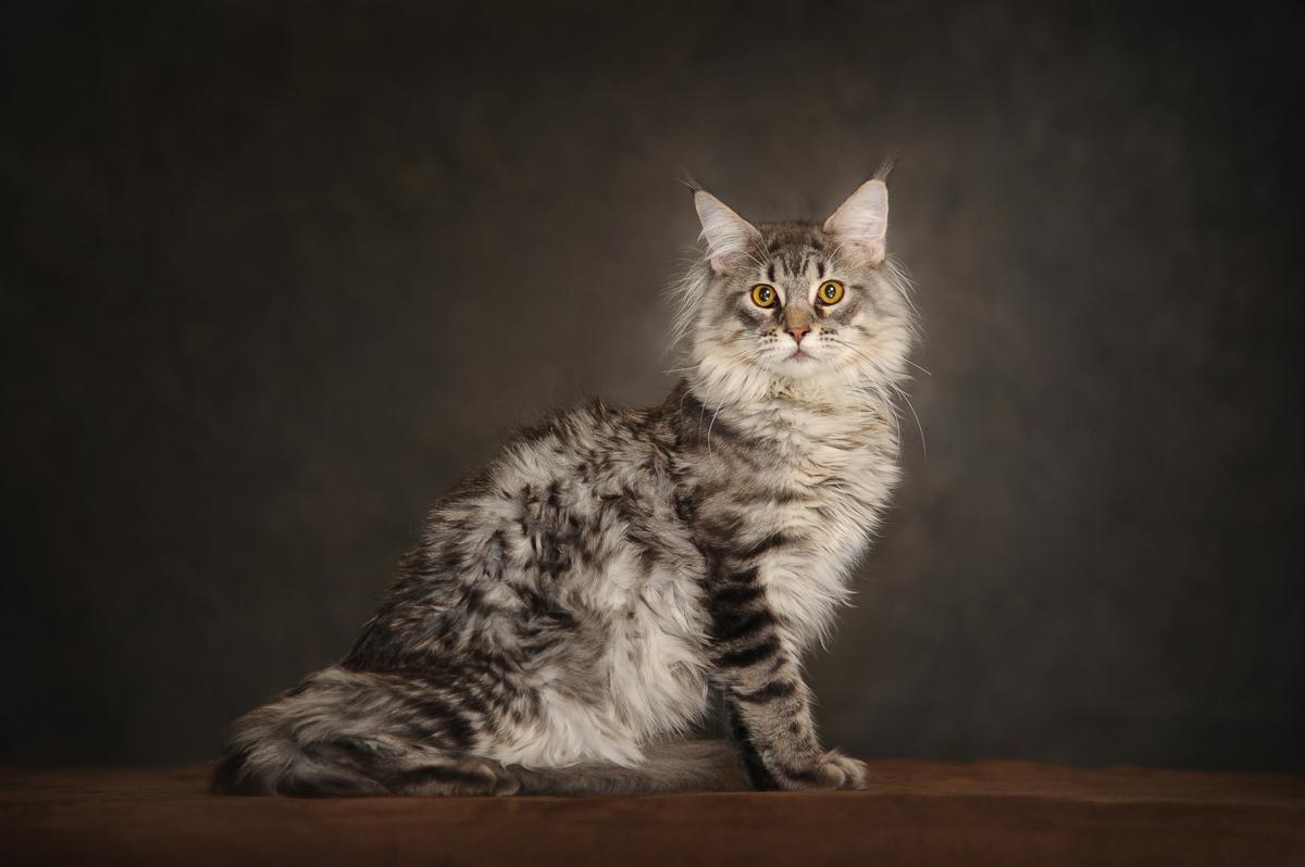 photographe-chiens-chats-animaux-portraits-studio-saint-malo-bretagne-181