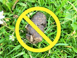 Dog Waste is not Dog Fertilizer