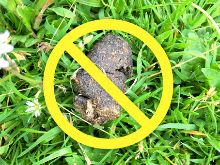 Dog Waste is not Dog Fertilizer