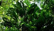 Gunung Mulu Nat. Park Sarawak Nov  2013-61.jpg