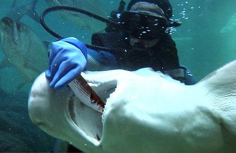 shark paige.jpg