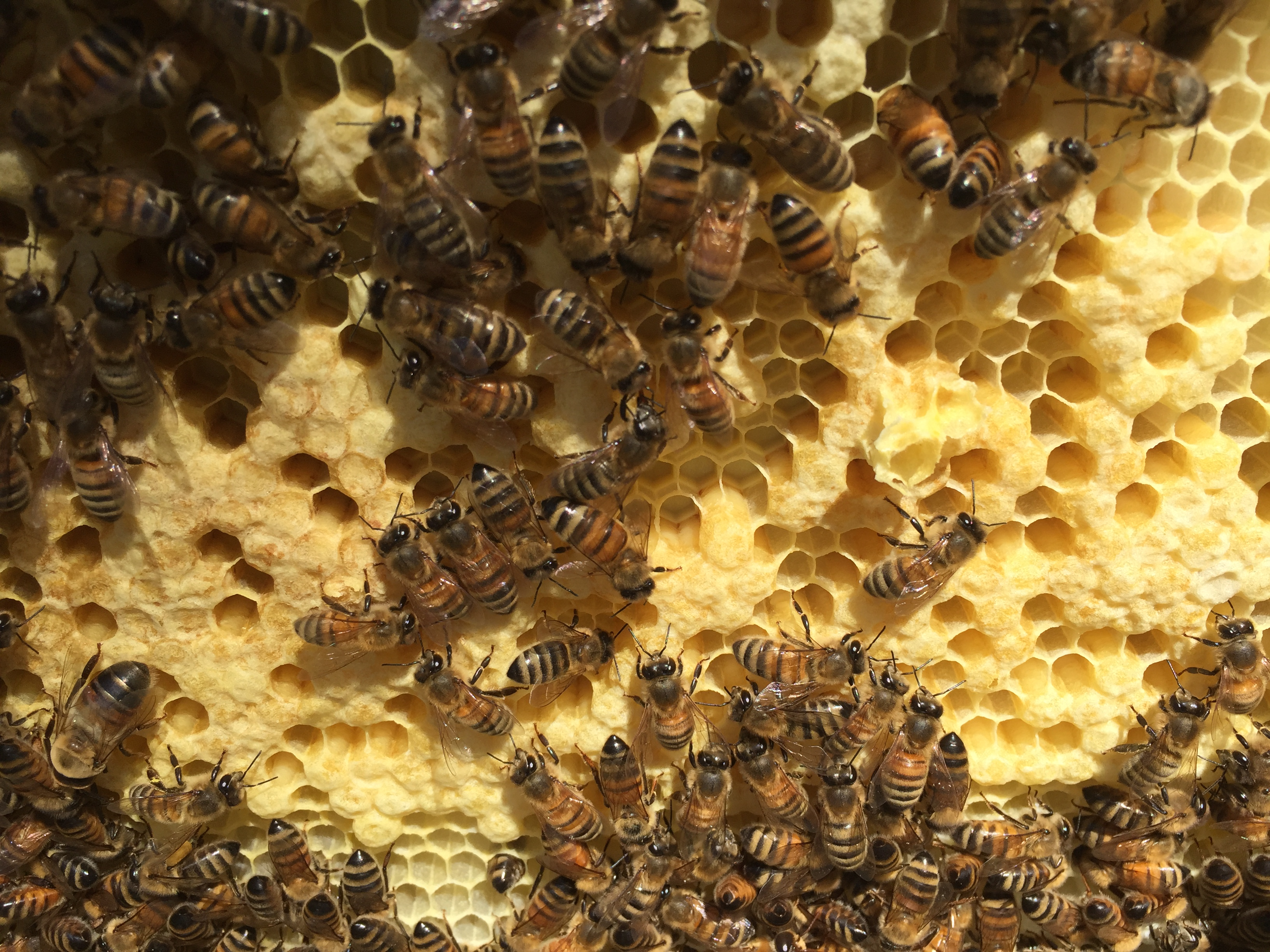 New bees on the way