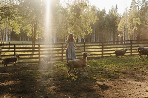 A Simple Guide to Running a Profitable Homesteading Business
