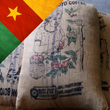 Cameroon boyo 100% arabica