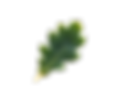 leaf-transparent-oak.png