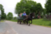Birthday package horse and carriage
