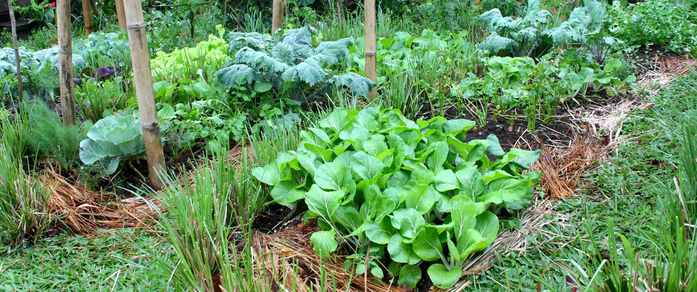 banner organic garden
