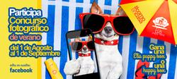 Elis puppy hotel madrid perros