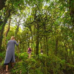 5 hour rainforest trek