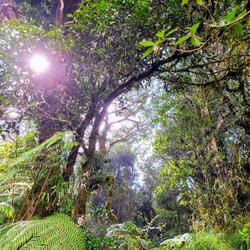 Rainforest trek 3-5 hrs