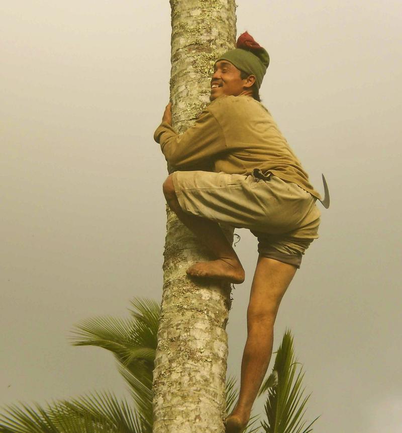 Pak Sali naik kelapa