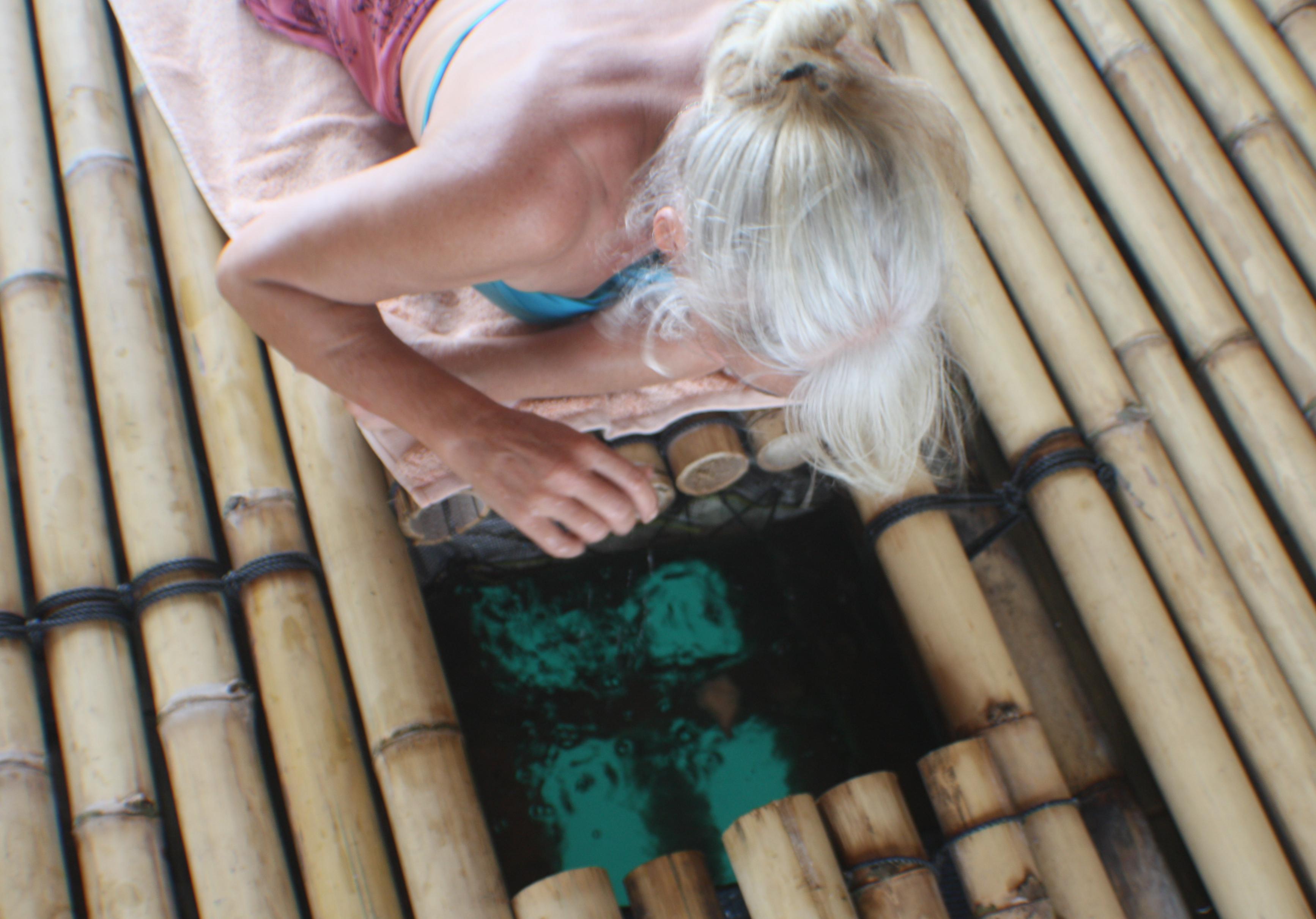 Bamboo Viewing platform
