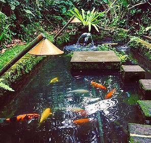 Koi Carp fish ponds