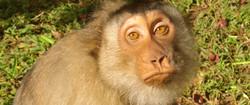 Meet (Rescued Monkeys) Lilly & Rose
