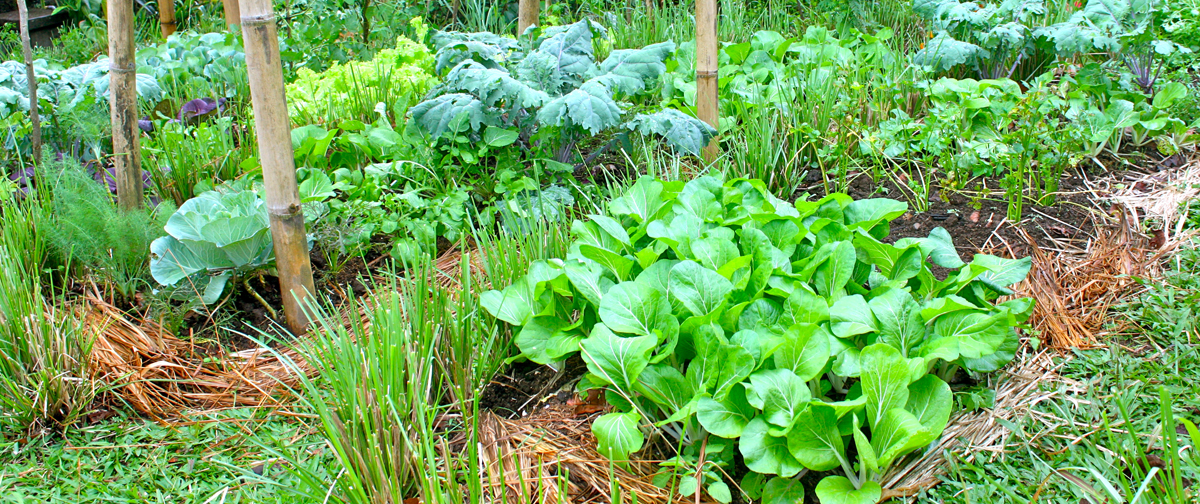 Take a Free Tour in our Organic Permaculture Gardens