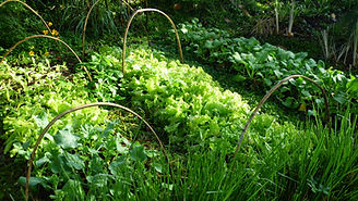 Lodge Organic gardens.jpg