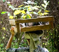 Tree planting in the Batukaru Rainforest