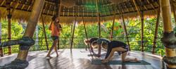 Fresh Air Yoga in the Treetops