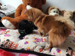 Elis puppy hotel madrid