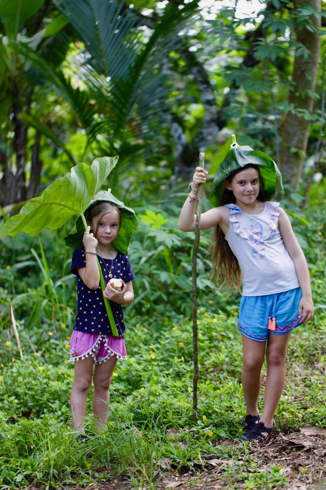 Discover our tropical rainforest
