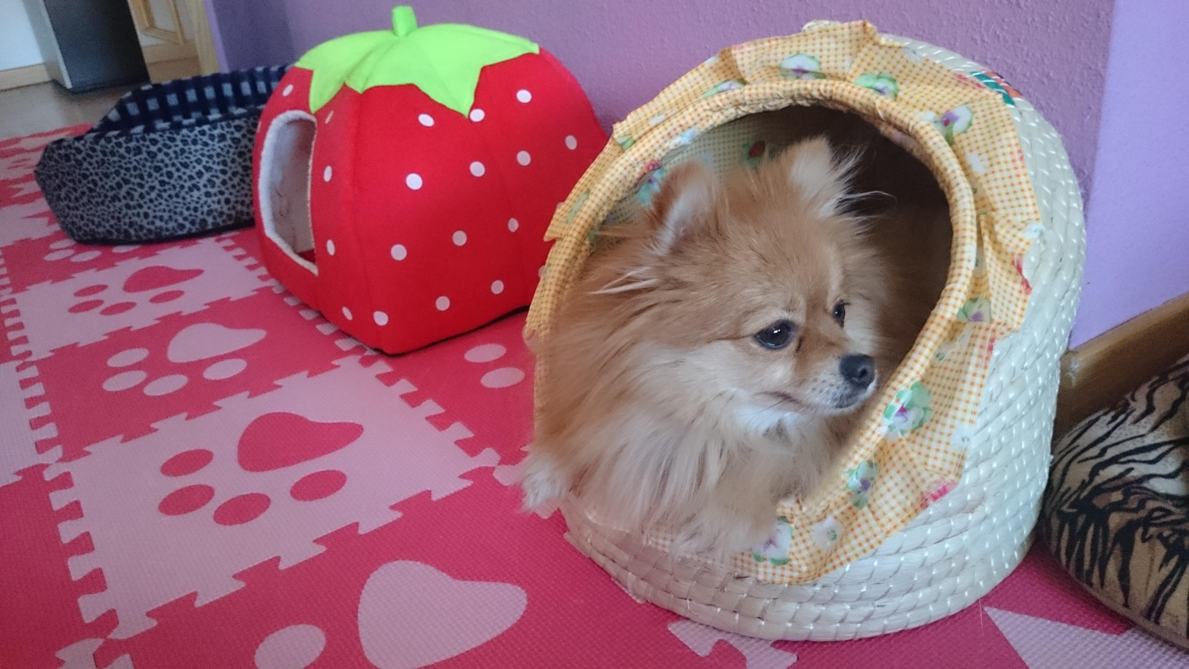 Elis puppy hotel madrid