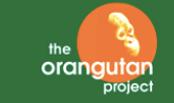 our adopted orangutans
