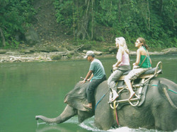 elephant trek 6