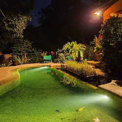 watch the fish at night cleaning our natural pool