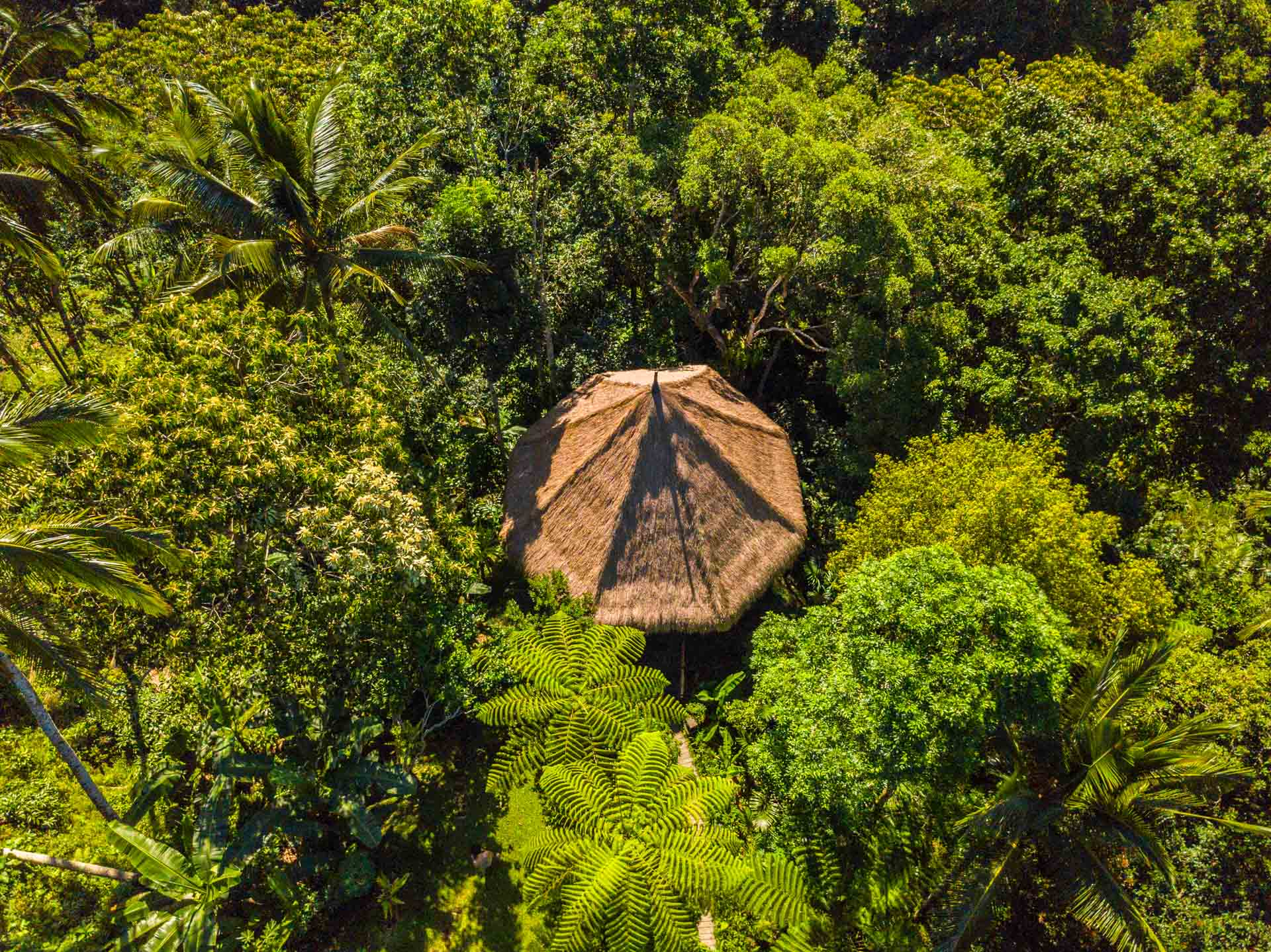 our treetop yoga bale from above