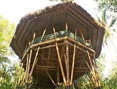 Bamboo bale day small.jpg