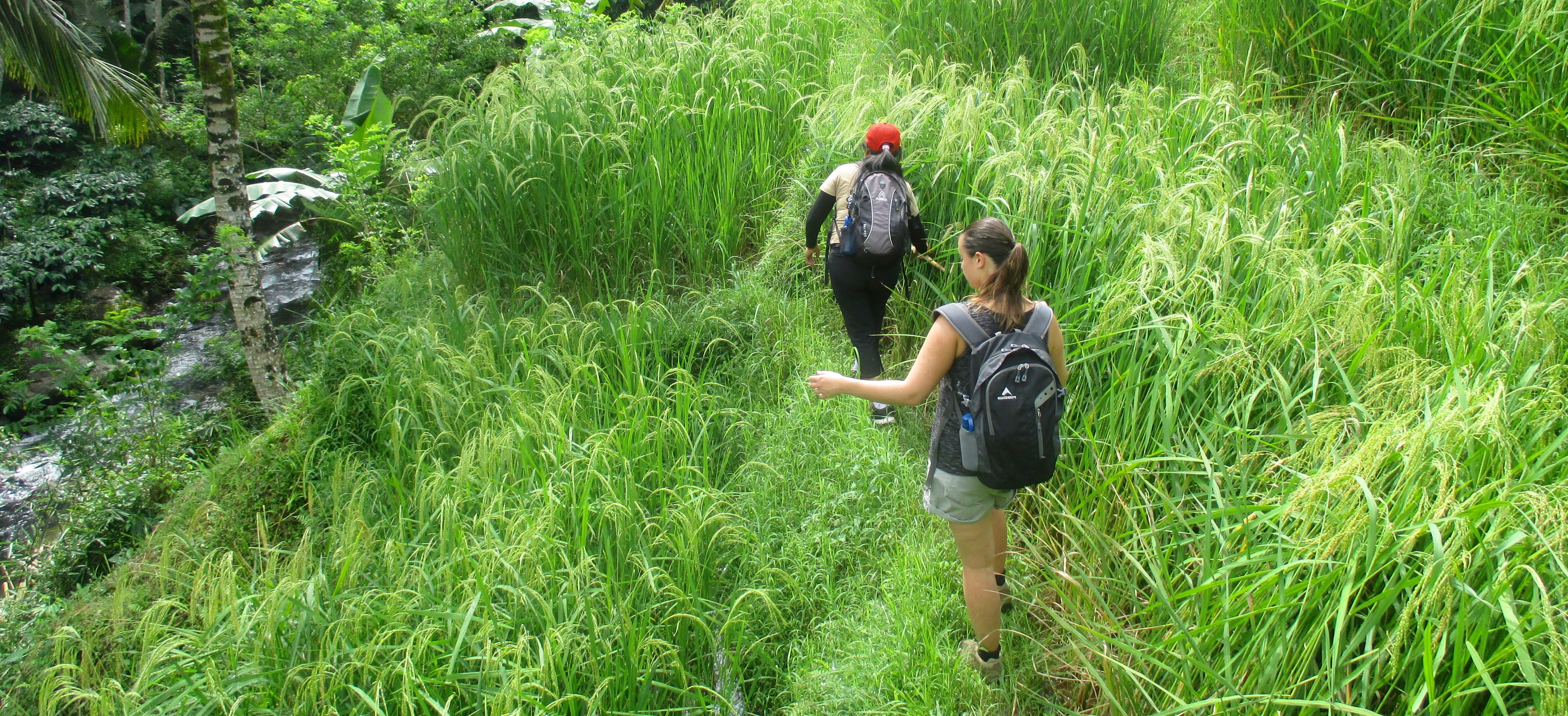 3 hour Treks through Rice Paddies & Food Forests