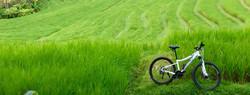 Mountain Bike Downhill to the Sea