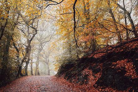 Autumn leaves @ BJ Honyaku