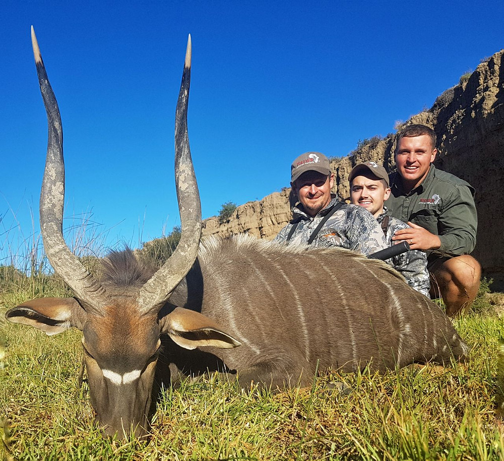 Nyala, Hunting in africa
