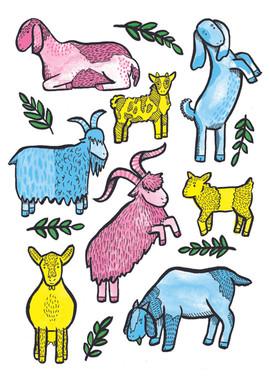 goats a4.jpg