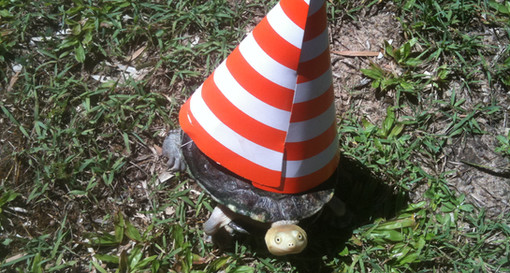 Clean Turtle Envy