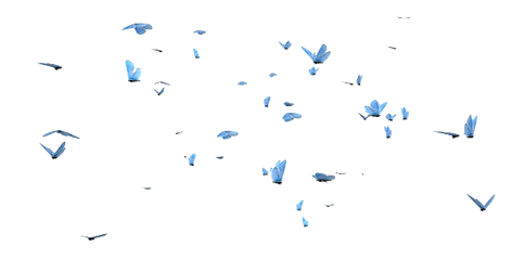 BUTTERFLY-SWARM-ADONIS-BLUE-C1-4K-PR.png