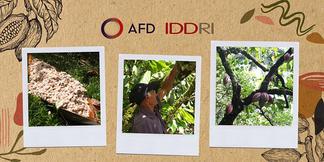 Hacia un cacao sostenible: oportunidades y desafíos para la cadena de valor