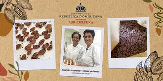 Aprende a diferenciar un grano de cacao defectuoso de un grano de calidad