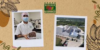 Preparación de masa de cacao para análisis sensorial con CONACADO