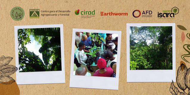 Cacao agroforestal en Rep. Dominicana: biodiversidad y producción