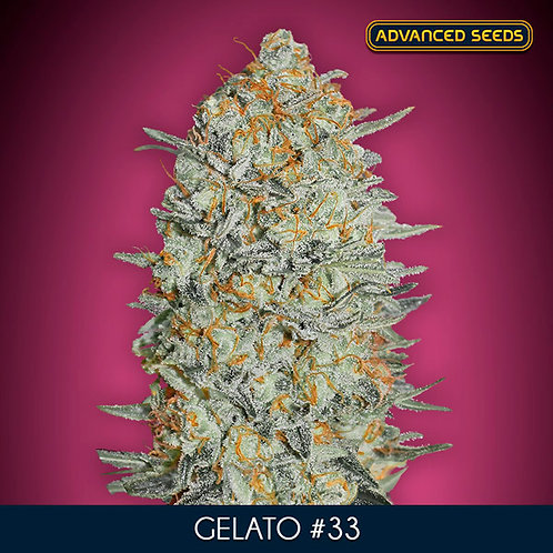 Gelato #33