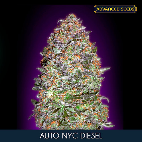 Auto New York City Diesel