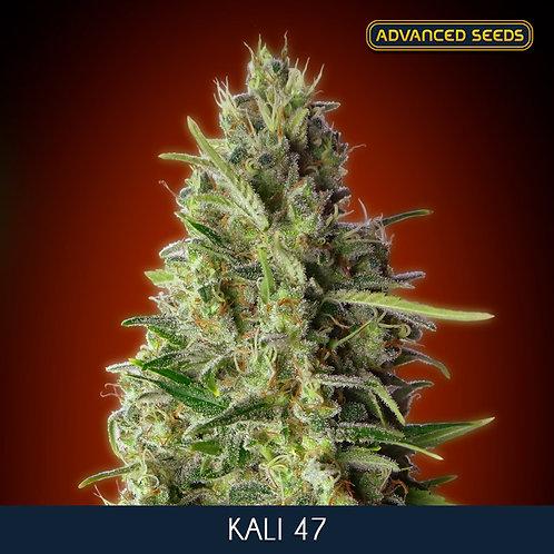 Kali 47